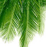 Palms Green Art Print
