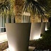 Palms In Pots Art Print