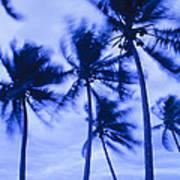 Palms In Storm Wind-bora Bora Tahiti Art Print