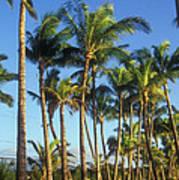Palms On Hawaii Beach Trail Art Print