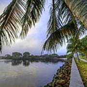 Palms Over The Waterway Art Print