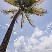 Palms Trees Along Luquillo Beach In Puerto Rico Art Print