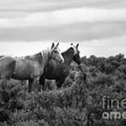 Palomino - Buttes - Wild Horses - Bw Art Print