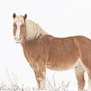 Palomino Horse In The Snow Art Print
