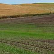 Palouse Patchwork 3 Art Print