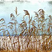 Pampas Grass Art Print by Dianne  Lacourciere