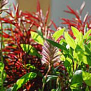 Pam's Garden 10827 Art Print