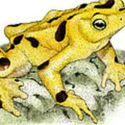 Panamanian Golden Frog Art Print