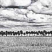 Panoramic Noir Art Print