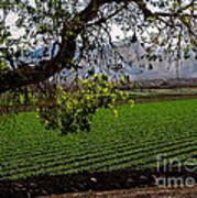 Panoramic Of Winter Lettuce Art Print by Robert Bales