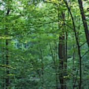 Panoramic Shot With Green Trees Art Print