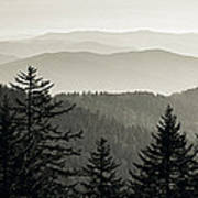 Panoramic View Of Trees With A Mountain Art Print