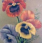 Pansies Bouquet Art Print