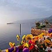 Pansies On Lake Maggiore Art Print
