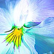 Pansy Flower 6 Art Print