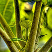 Papaya Shoot Art Print