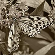 Paper Kite On Frangipani Flowers Art Print