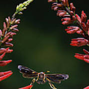 Paper Wasp In Flight Art Print