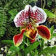 Paph Fiordland Sunset Orchid Art Print