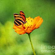 Papillon Art Print by Darren Fisher
