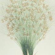 Papyrus Art Print