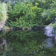 Paradise Pond Art Print