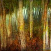 Park #8. Memory Of Trees Art Print