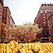 Park Avenue In The Spring  Art Print