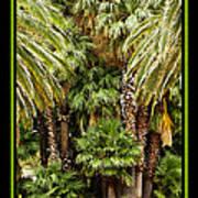 Park Palms Art Print