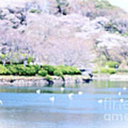 Park With Pond And Cherry Blossoms In Spring Art Print