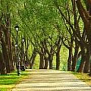 Parkway Among Trees Art Print