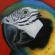 Parrot 1 Art Print