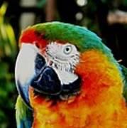 Parrot  Art Print by Bruce Kessler