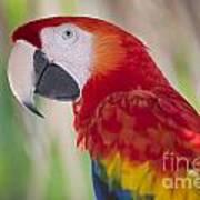 Parrot On Isla Tortuga-207 Art Print