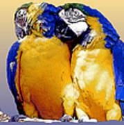 Parrot Passion 1 Art Print