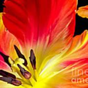 Parrot Tulip On Fire Art Print
