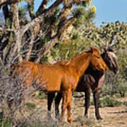 Partners - Wild Horses Art Print