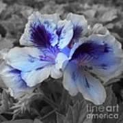 Pasion Blue Art Print