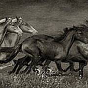 Paso Peruvian Horses On The Run Art Print