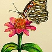 Passion Butterfly On Zinnia Art Print