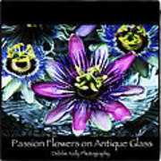 Passion Flower Poster Art Print