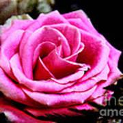Passionate Rose Art Print