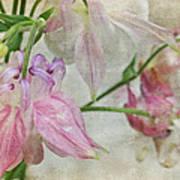 Pastel Columbines Art Print
