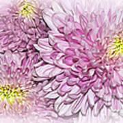 Pastel Pink Mums Art Print