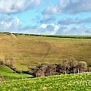 Pasture Land - Dorset Art Print