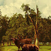 Pastureland Art Print