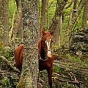 Patagonian Packhorse Art Print