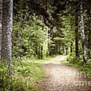 Path In Green Forest Art Print by Elena Elisseeva