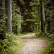 Path In Old Forest Art Print