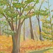 Path Of Trees Art Print
